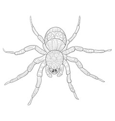 Adult coloring bookpage a cute spider image for vector