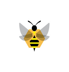bee open wings and fly in an hexagon beehive vector image