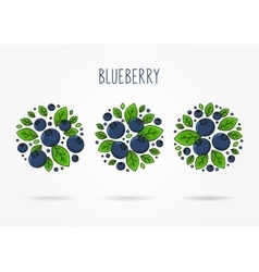 Blueberry round labels creative concept vector image