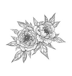 hand drawn floral bunch with peony flowers vector image