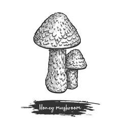 Honey mushroom sketch design vector