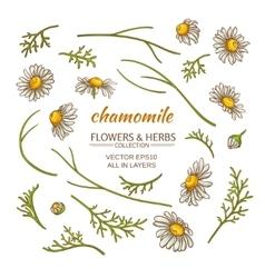 chamomile elements set vector image vector image