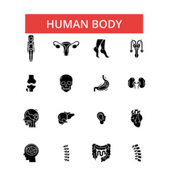 human body thin line icons linear vector image vector image