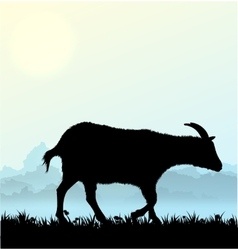 Silhouette of goat with grass and flowers vector image vector image
