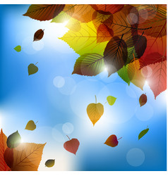 Autumn leafs background- fall with back light vector