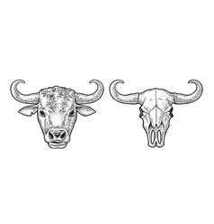 bull head and skull vintage black vector image