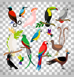 Exotic tropical birds on transparent background vector
