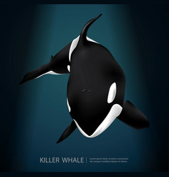 Killer whale under sea vector