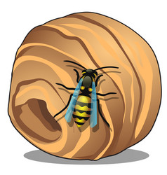 the hornet or wasp nest vespiary isolated on vector image