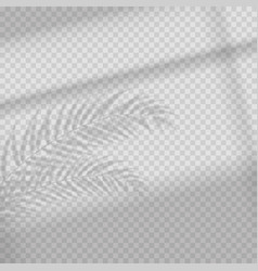 transparent shadow overlay effect vector image