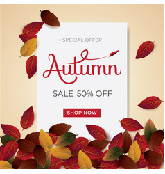 autumn background sale vector image
