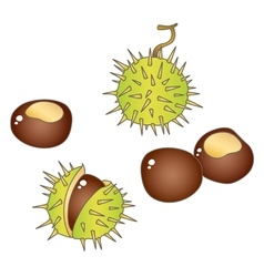 Chestnuts vector
