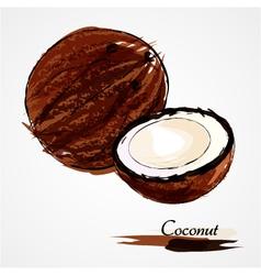 coconuts vector image
