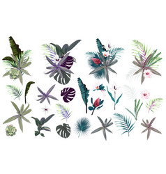 leaves and flowers succulent and palms vector image