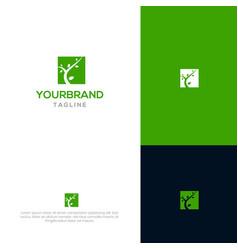 tree logo template vector image