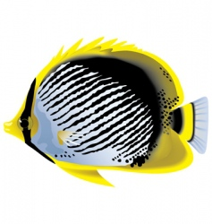 Tropical fish butterflyfish chaetodon vector