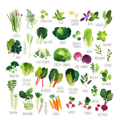 Vegetables and common culinary herbs vector