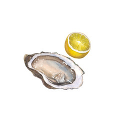 Watercolor oyster and lemon isolated on white vector