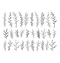 hand drawn botanical decorative design elements vector image