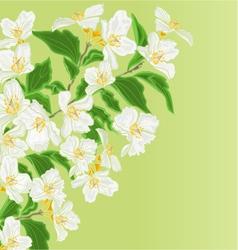 Jasmine flower branch spring background vector image vector image