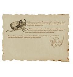 Beetle - european rhinoceros vector
