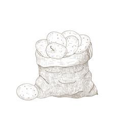 monochrome drawing potato tubers in burlap bag vector image