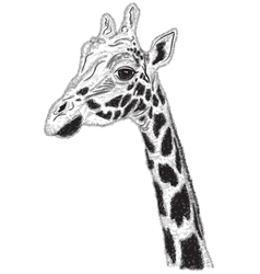 portrait of Giraffe vector image