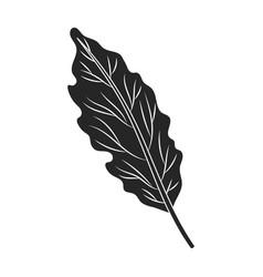 Leaf cabbage iconblacksimple vector