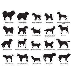 set of dogs silhouettes-5 vector image