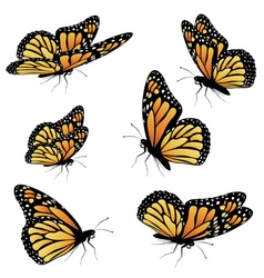 Orange monarch butterfly2 vector