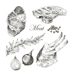 Steak meat hand drawing with pepper and vector