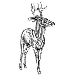 Vintage style woodcut stag deer vector