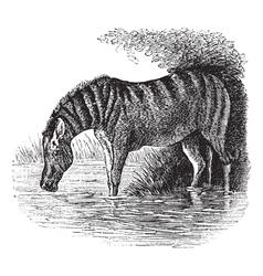 Donkey vintage engraving vector image vector image