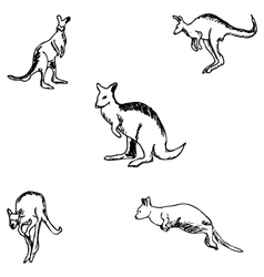 Kangaroo a sketch by hand pencil drawing vector