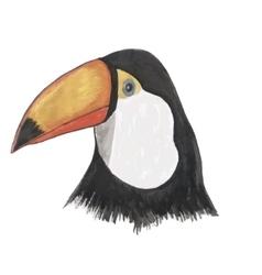 Toucan watercolor isolated bird vector image