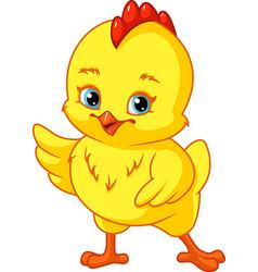 Cute baby chicken vector