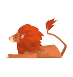 Lying powerful lion red mammal jungle animal vector