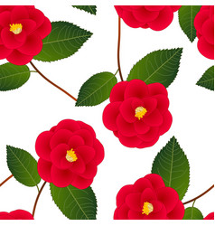 red camellia flower on white background vector image