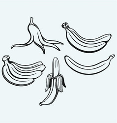 Bunch of bananas vector image