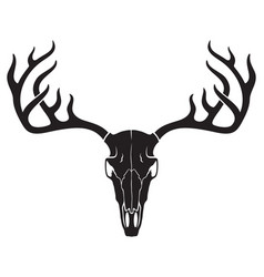 deer skull with horns vector image