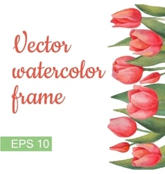 Floral Watercolor Border with Tulips flowers and vector image