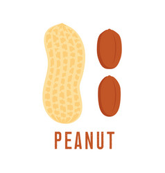 Peanut icon isolated on white background vector