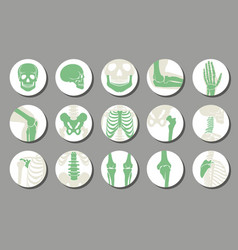 Orthopedic and spine icons vector image