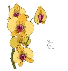 Flower of yellow orchid vector image vector image