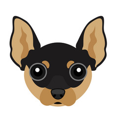 Cute chihuahua dog avatar vector