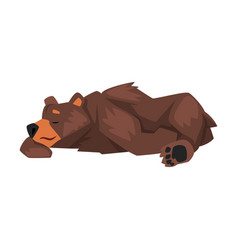 Cute sleeping brown grizzly bear wild animal vector