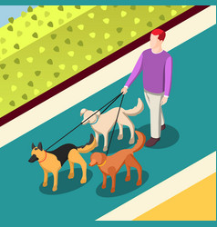 Dogs walking isometric background vector