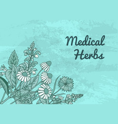 hand drawn medical herbs background with vector image