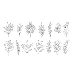 leaves set line art hand drawn branches vector image