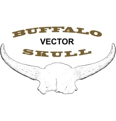 Old Buffalo Skull vector image